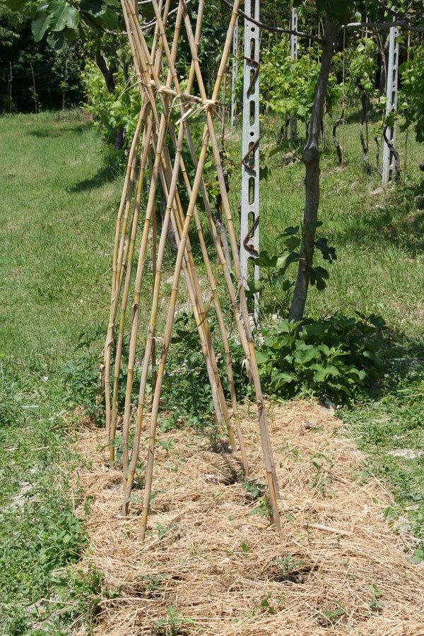 A dimora tutti i pomodori finalmente villa villacolle for Piantare pomodori