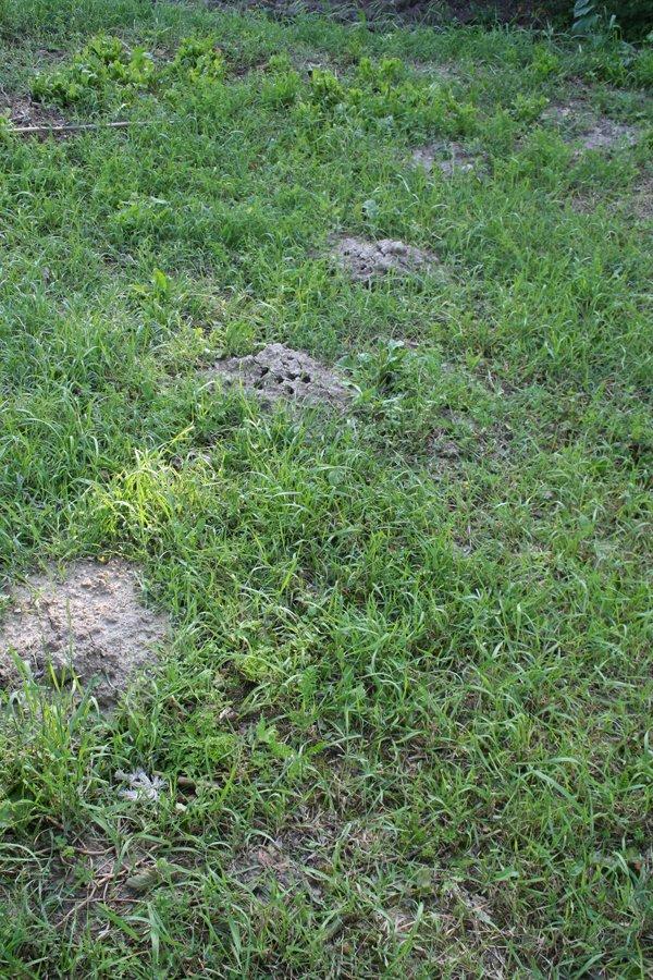 Quante talpe mamma villa villacolle for Talpe in giardino