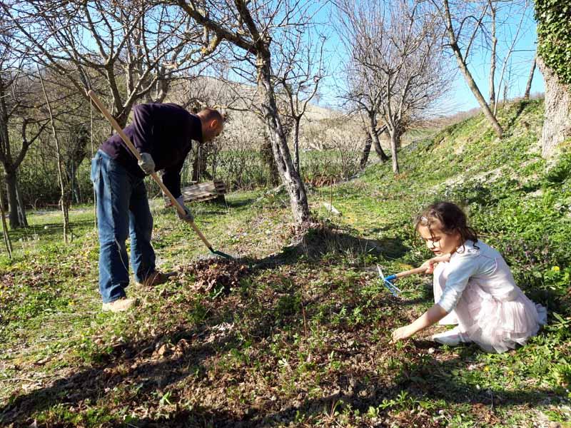 pulire il terreno prima dei trapianti